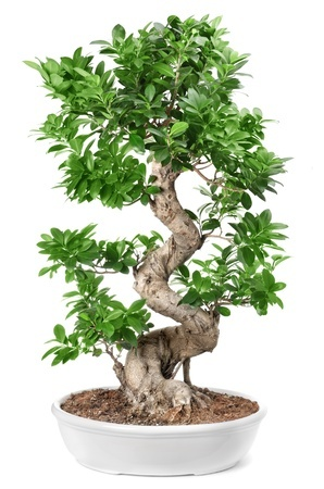 How To Choose And Indoor Trees