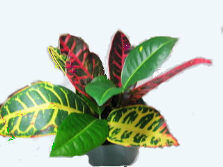 Exotic Houseplants on red and green ornamental grass, red and green leaf plant, red and green ground cover,