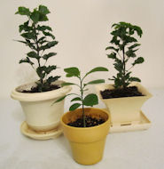 propagating houseplants from stems and seeds