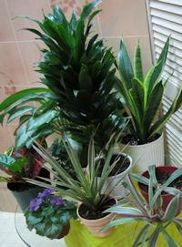 organic houseplants on table